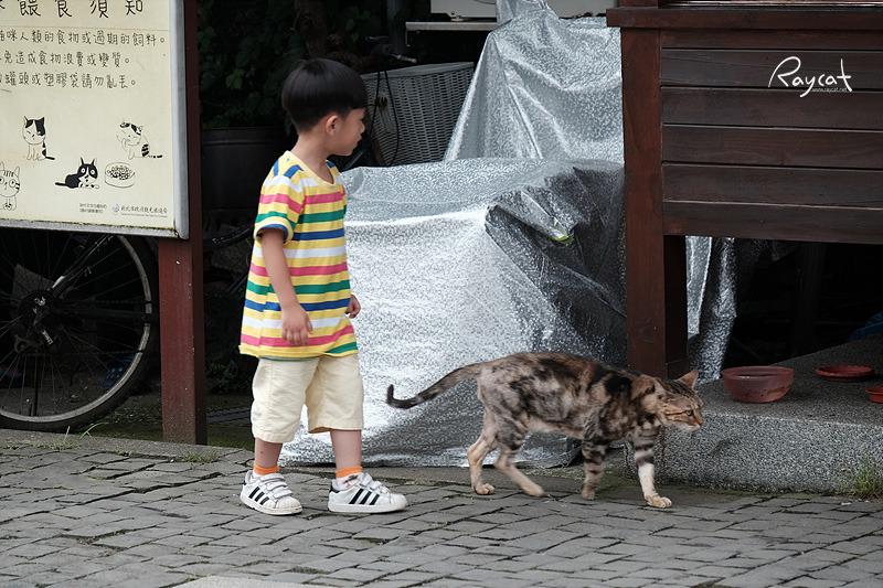 허우통 고양이 마을 아이와 함께 걷는 고양이