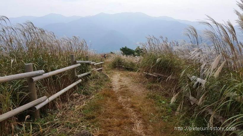 민둥산 억새풀 풍경